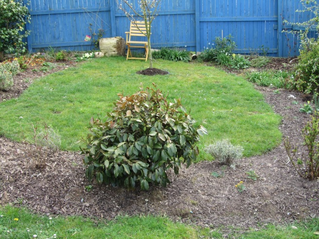 gardening. gardening disasters. gardening mistakes. bees. ladybirds.