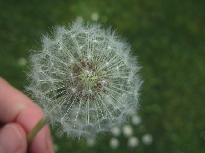 dandelion seed head, clocks, parenting teens, anxiety.
