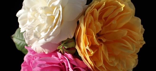Bloomsday, James Joyce, Ulysses,