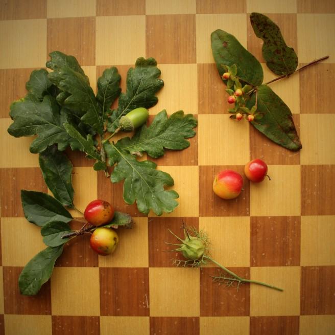 acorn, hypericum, crab apples, Nigella