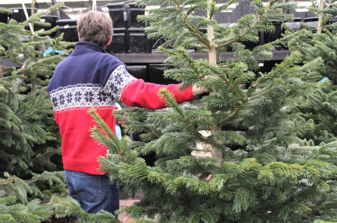 choosing the Christmas tree.