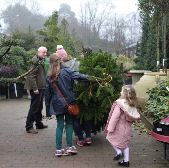 Children take charge of the Christmas tree.
