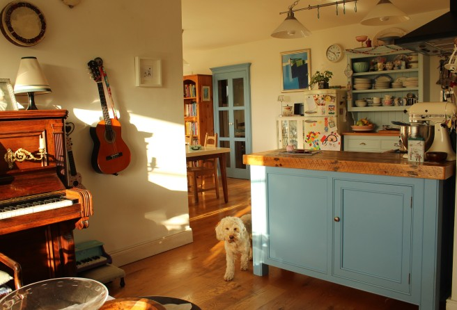 blue kitchen with cockapoo
